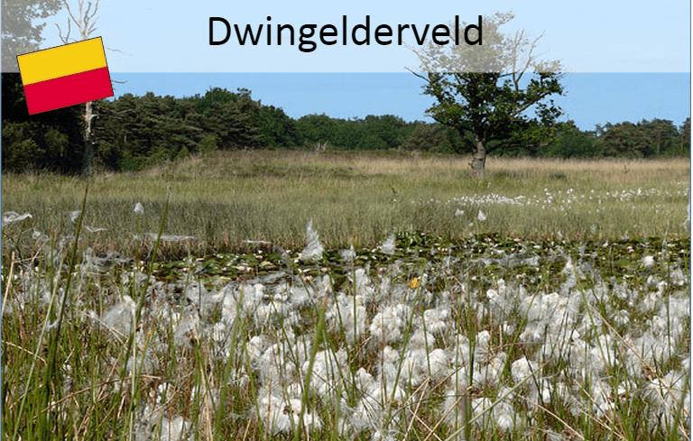 Drenthepad:  Dwingelderveld