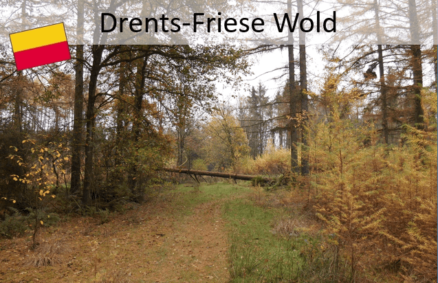 Drenthepad; Drents-Friese Wold