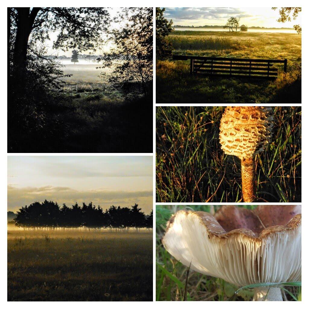Goedemorgen Herfst