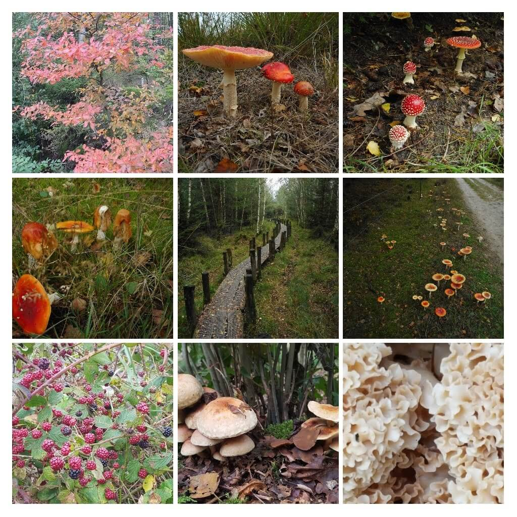 Roots Dwingelderveld